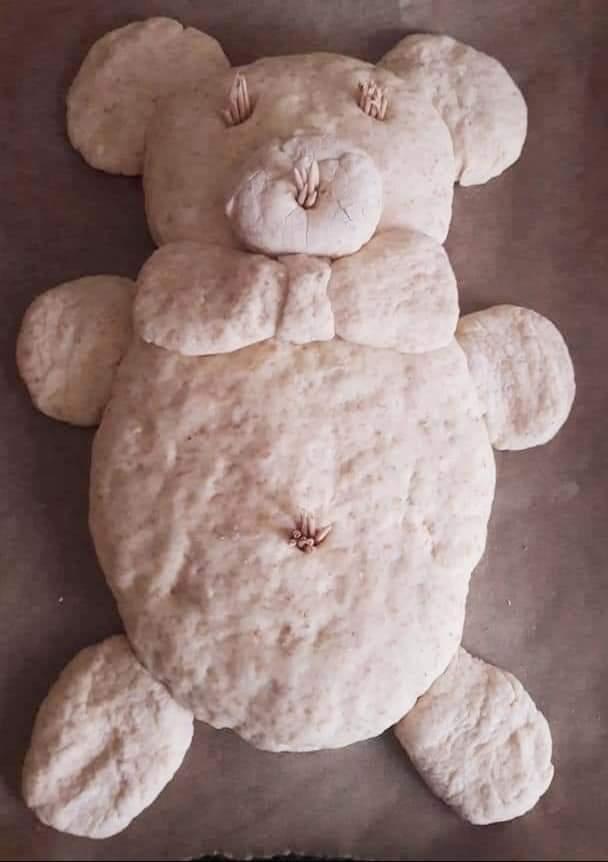 Pâinică ursuleț 3